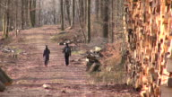 MS View of walker walking in forest through stack of woods / Orscholz, Saarland, Germany