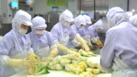 View of washing cabbage at Kimchi factory (Popular traditional fermented Korean side dish)