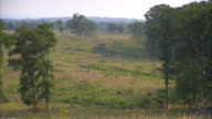 WS TU View of Wheat stalks to open field at Gettysburg National Military Park / Gettysburg, Virginia, United States