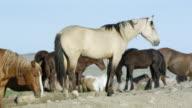 View of wild horse standing on dirt pile as others walk by