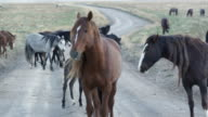 View of wild horses walking across a dirt road