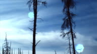 WS PAN View of Yellowstone national park with burnt trees / Wyoming, USA.