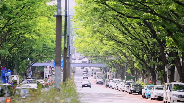 WS ZO View of Zelkova trees line both sides of Omotesando with cars and street lights / Shibuya, Tokyo, Japan