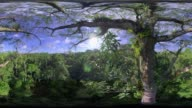 View Over Amazonian Tree Canopy