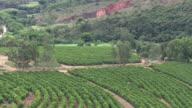 MS AERIAL DS View over Coffee plantation / Minas Gerais, Brazil