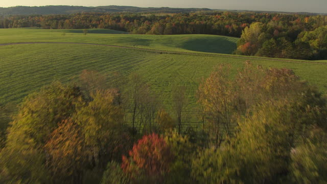 WS AERIAL View over Dense forest landscape / Ohio, United States