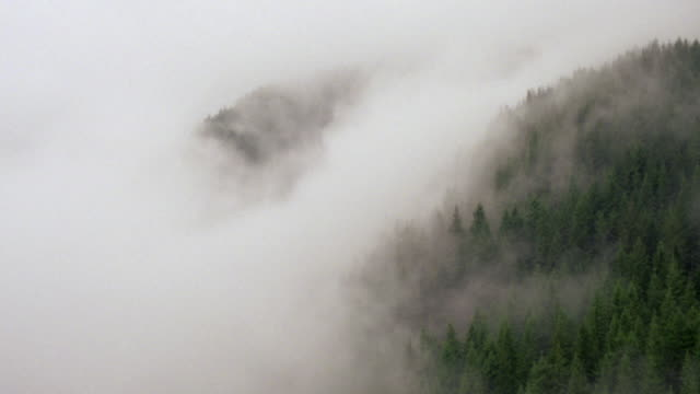 MS AERIAL View over evergreen tree covering mountains shrouded in fog