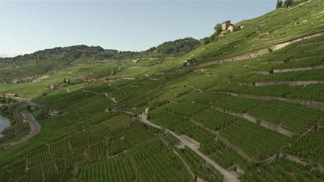 WS AERIAL View over village of Les Abbayes and Le Dezaley in middle of vineyard terraces of Lavaux region with Lake Geneva / Les Abbayes, Switzerland