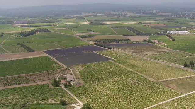 WS View over vineyards and roadway / Rhone Alpes, France
