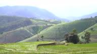 Anzeigen der Neigung: Pa Pong Pieng terrassierten Reisfelder auf jeden Berg