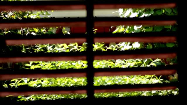 trought Fenster Jalousien Blick auf den Garten