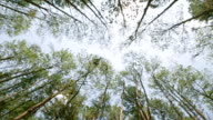 View under pine