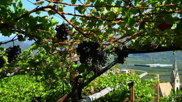 Vineyard Above Old Town Tracking Shot
