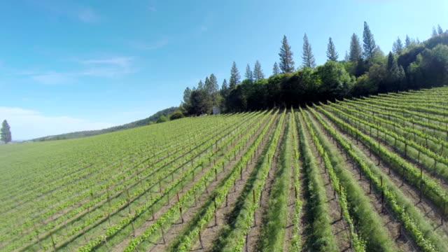 Vineyard-Luftaufnahme