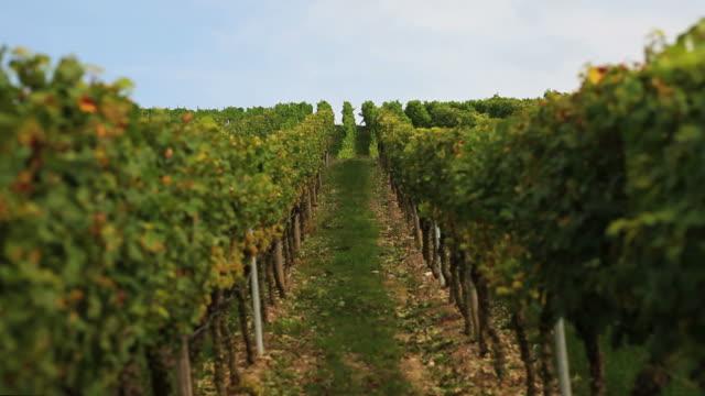 Vineyard Against Blue Sky Crane Shot
