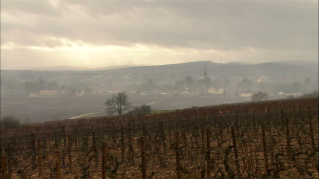 WS LS ZO ZI Vineyard and distant village on foggy day / Burgundy, France