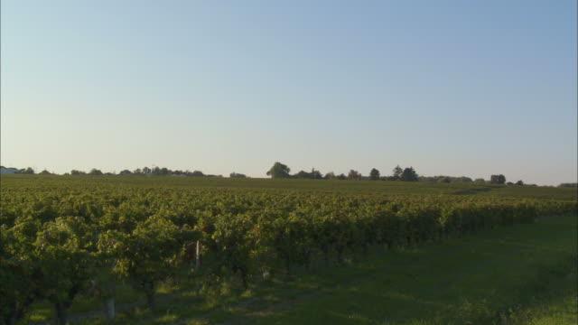 WS, PAN, Vineyard and rural road, Bordeaux, France
