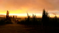 HD TIME LAPSE: Vineyard At Dawn