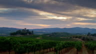 Vineyard at Dusk. 4K