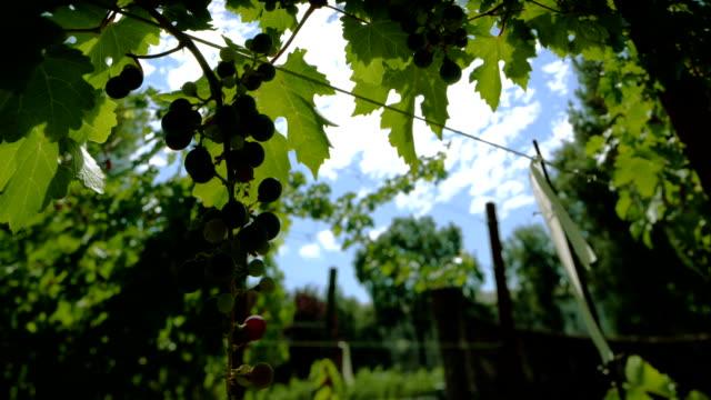 Vineyard Cloud Timelapse