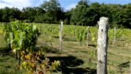 Vineyard in wine country of France