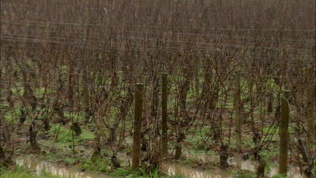 MS ZO WS Vineyard in winter / Burgundy, France