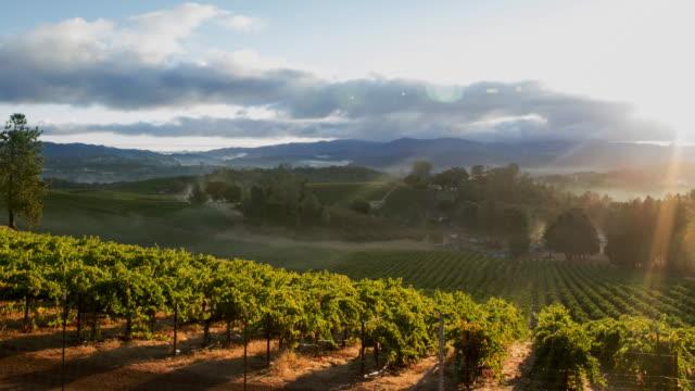 Vineyard Misty Sunrise