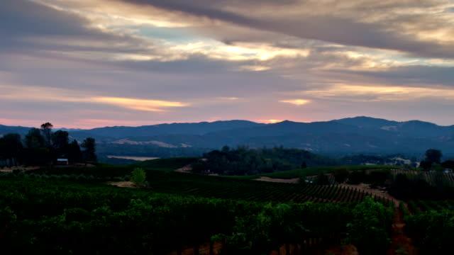 Vineyard Morning