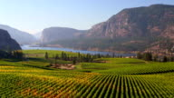 Vineyard Okanagan Valley McIntyre Bluff Vasuex Lake