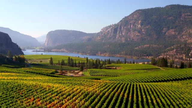 Vineyard Okanagan Valley McIntyre Bluff Vasuex Lake