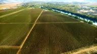 AERIAL Vineyard panorama
