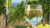 HD DOLLY: Vineyard Reflection In A Glass