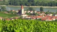 Weinberge über Weissenkirchen in Danube Valley