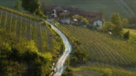 ZO WS HA Vineyards and winding road rural landscape, Piedmont, Italy