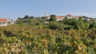 Vineyards at Lumbarda, Korcula Island, Dalmatia, Croatia, Europe