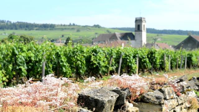 Vineyards Burgundy France