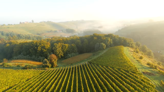AERIAL Vineyards In The Mist
