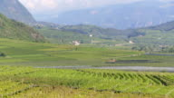 Vineyards near Tramin in South Tyrol TILT UP
