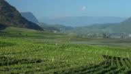 Vineyards near Tramin in South Tyrol PAN