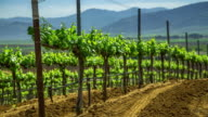 Vineyards on Rolling Hills - Motion Control Timelapse