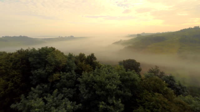 AERIAL Viniferous Region In The Fog