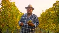 TS Winzer Erklärung über die wachsende Trauben In The Vineyard