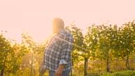 WS Vintner Looking Over His Vineyard