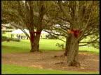 campus condolence boards USA Virginia Blacksburg Virginia Tech EXT Red and orange ribbons tied around trees on campus / condolence boards in grounds...