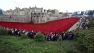 Visitors admire ceramic poppies at the tower of London The installation 'Blood Swept Lands and Seas of Red' by artists Paul Cummins and Tom Piper...
