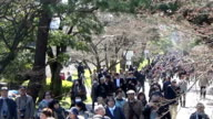 Visitors thronged to the Imperial Palace grounds on March 252016 in TokyoJapan to catch sight of the splendid cherry trees blooming inside along Inui...