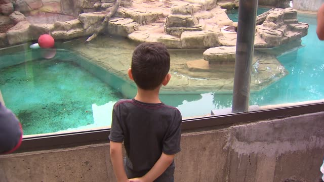 Visitors watch Anana the polar bear at Lincoln Park Zoo on Aug 22 2014 in Chicago