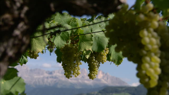 Viticulture in the mountains
