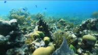 Vivid track of sea life swimming through bright green and blue coral