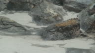 Volcanic sulphur waters
